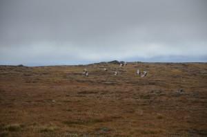 Mange av Norges Fjellstyrer har bidratt med data til et forskningsprosjekt på jaktuttak, begrensinger og takseringer av lirype.