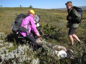 10. klasse ved Kvikne skole på jakt med fellingstillatelse gitt av Kvikne Fjellstyre i 2015.
