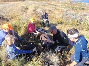 En av sakene som ble tatt opp i siste Fjellstyremøte var tildeling av kalv til førstegangsjegere.